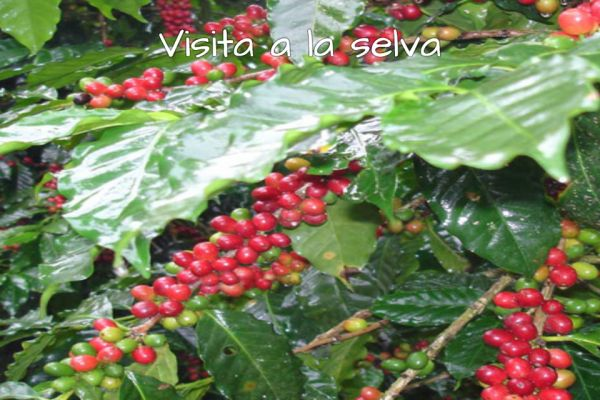 visita-selva03264DEC-3719-F268-FCC6-37CAC448F91B.jpg